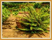 29th Jul 2018 - Amphora And Fern