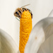 Balancing Bee by yorkshirekiwi