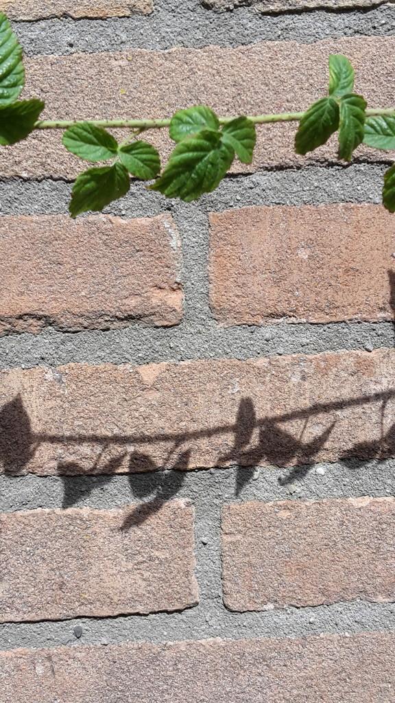 Shadow - Monotoon by ideetje