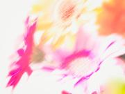 30th Jul 2018 - gerberas in a spin