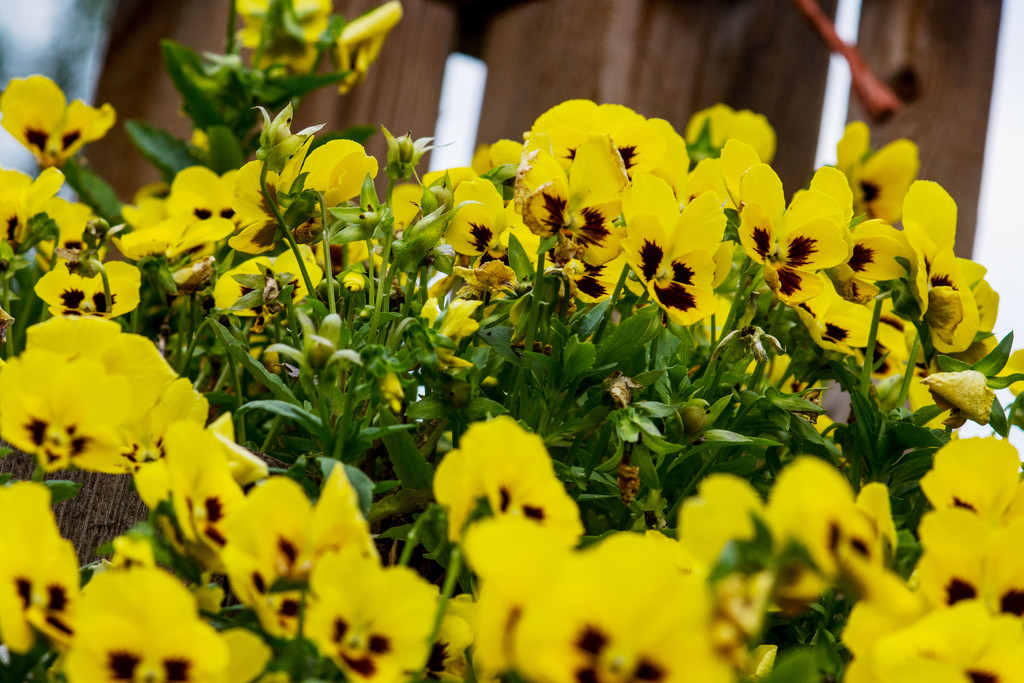 July Words - Worms Eye Wednesday - Flowers  by farmreporter
