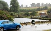 28th Jul 2018 - Stop - Ducks Enjoying The Rain