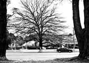 19th Jul 2018 - some tree