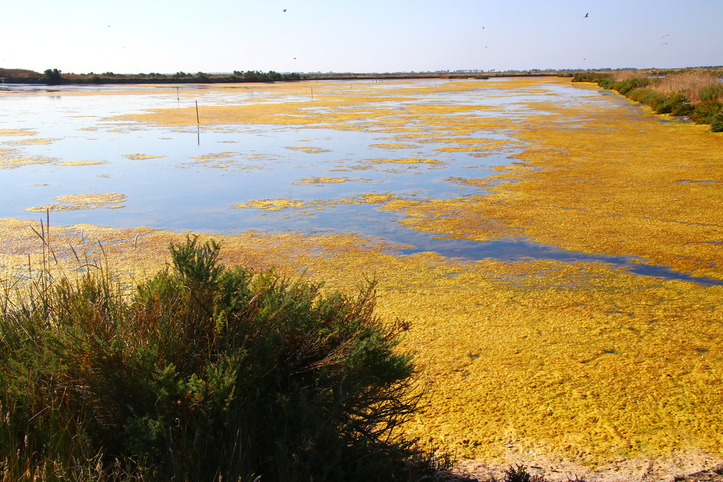 Salt Marshes on Il de Re by terryliv
