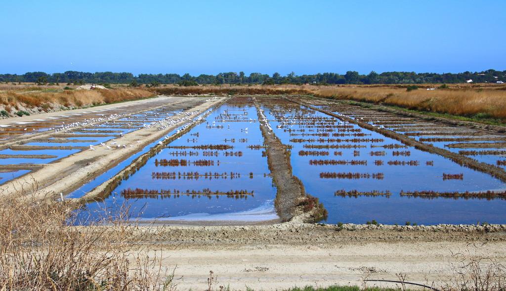 Salt Farms on Il de Re by terryliv