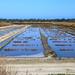 Salt Farms on Il de Re