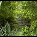 Stream & Woods