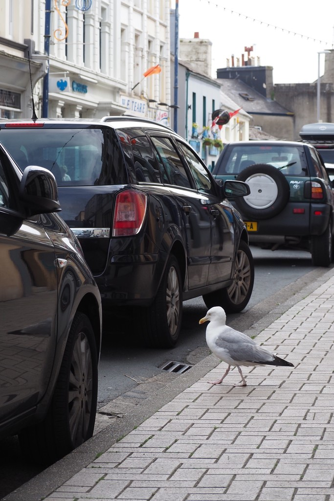 Seagull Crossing...why not? by s4sayer