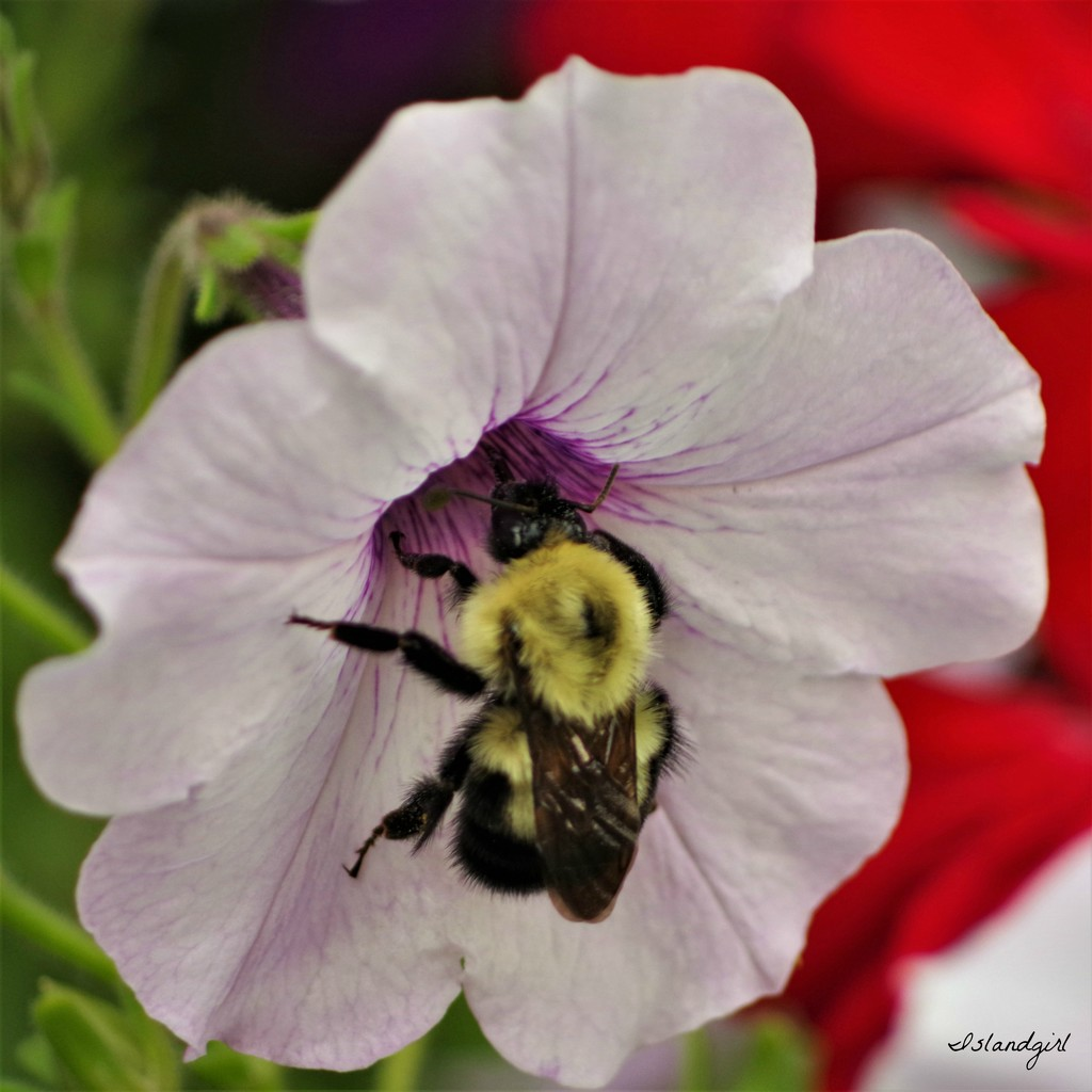 Bee and Petunia  by radiogirl