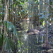 Reflections  in a stream deep in the Mary Cairncross forest by 777margo