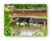 2nd Aug 2018 - Canal Family