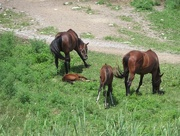2nd Aug 2018 - Dam and foal + dam and foal