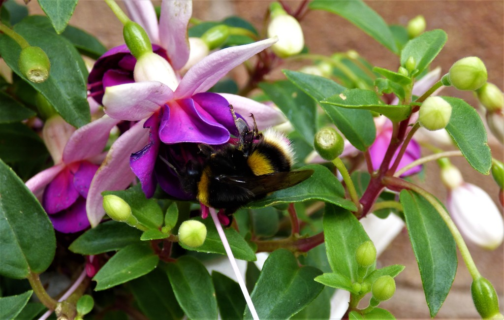 Busy as a bee  by beryl