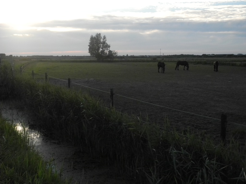 DSCN1840 summerevening in Holland by marijbar