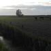 DSCN1840 summerevening in Holland