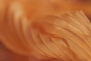 4th Aug 2018 - 2018-08-04 dry hosta leaf abstract