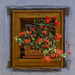 193 - Geraniums at the window (2) by bob65