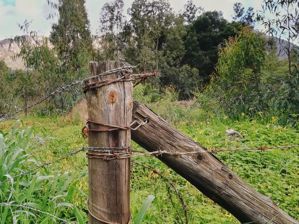 Fence Post by salza