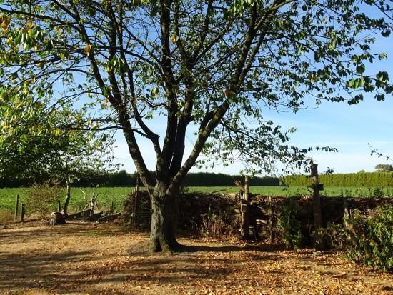 autumn in summer by gijsje