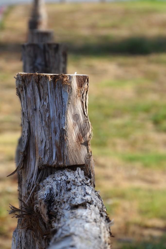 Cedar split rail fence by louannwarren