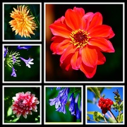6th Aug 2018 - Garden Collage