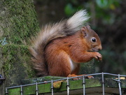 7th Aug 2018 - your nuts, sir