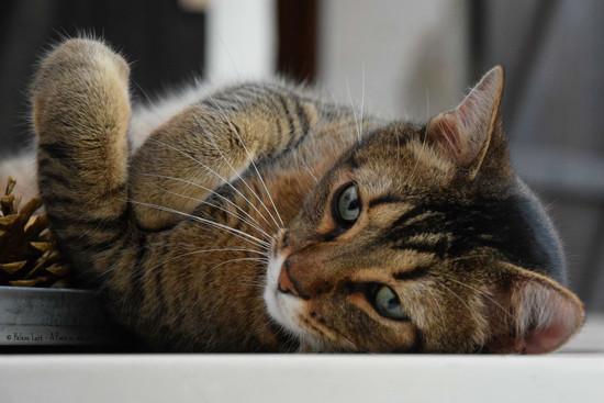 (cute) international cat day by parisouailleurs