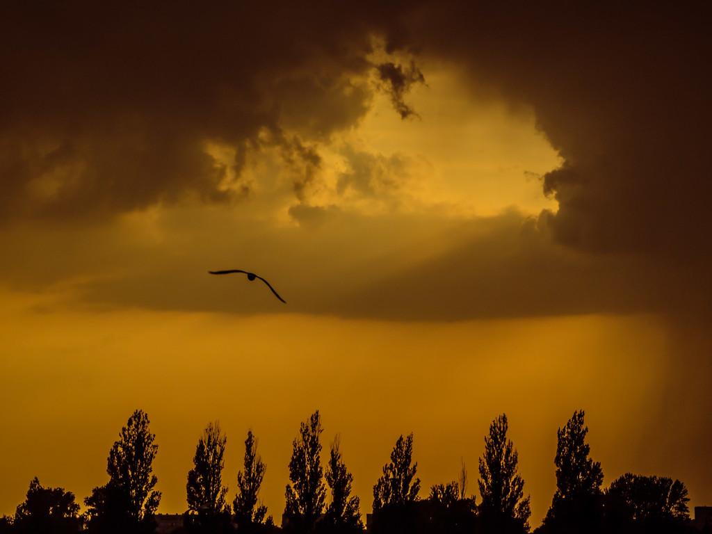 The storm by haskar