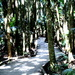 Walkway through Marycairn cross forest