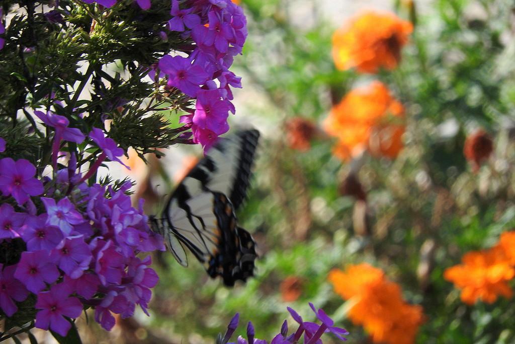 Chasing Butterflies by homeschoolmom