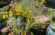 10th Aug 2018 - Flower Garden