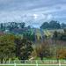 Avontuur wine and Stud farm