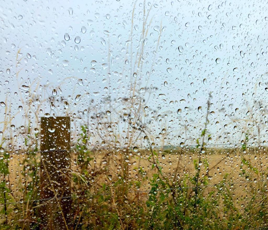 rain drops by 365projectdrewpdavies