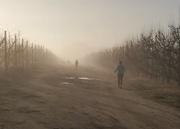 11th Aug 2018 - Misty walk