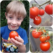 11th Aug 2018 - Thomas and tomatoes