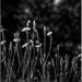random weeds