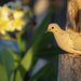 """Peace"", Dove ..."