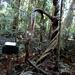 Strangulation Vines in Marycairn Cross forest
