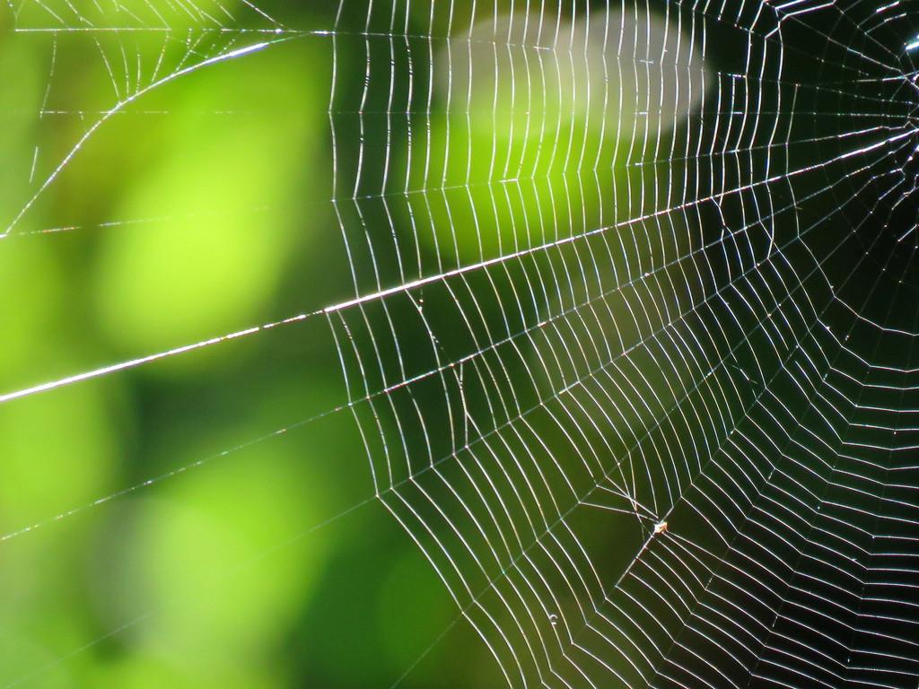 Web  by seattlite