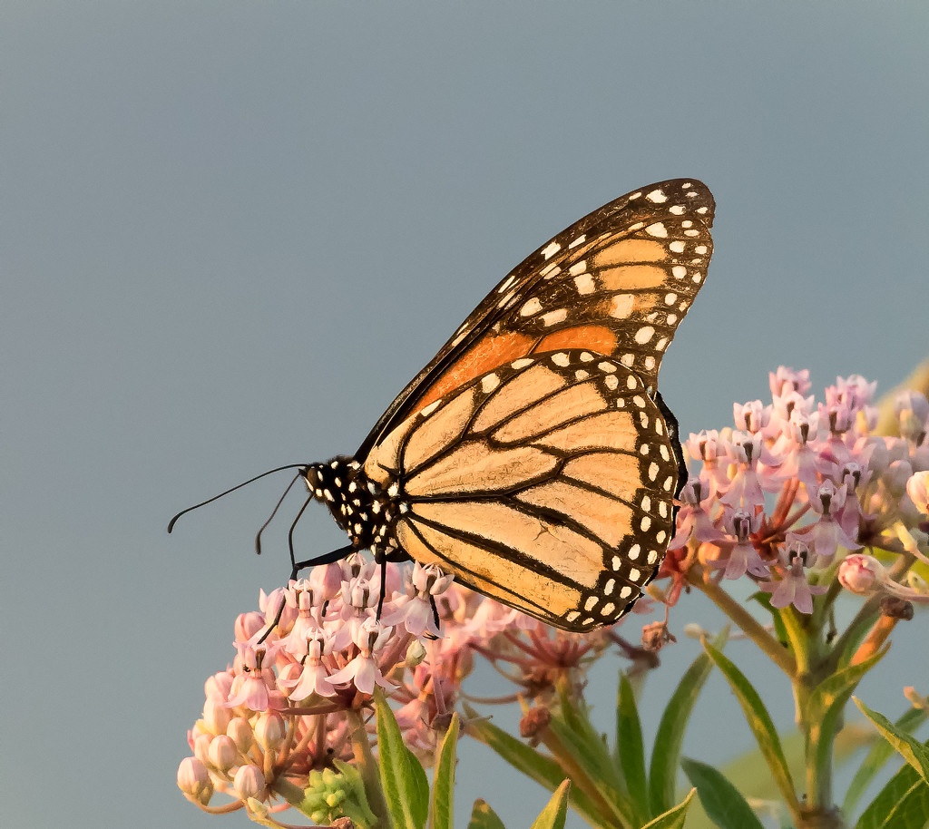 Butterfly at Blackwater by shesnapped