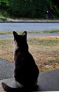 13th Aug 2018 - Guard Cat