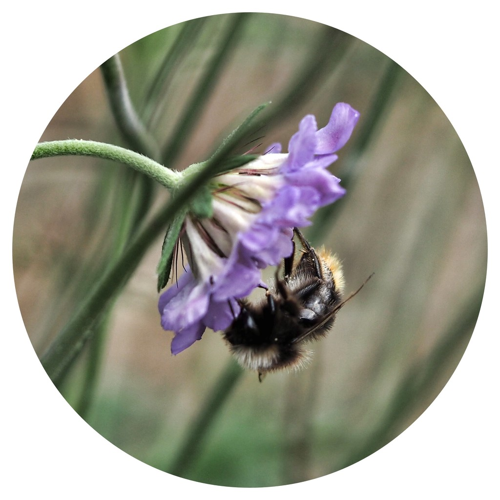 just a little bee! by janemartin