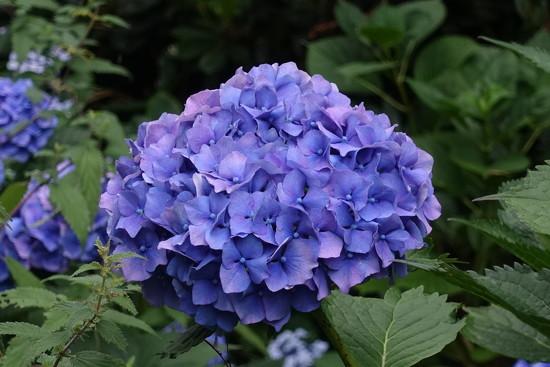 Pretty Blue by johnsutton