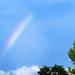 3148-0814 Rainbow