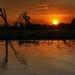 Sunset over Kakadu by pusspup