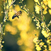 wattle it BEE by annied