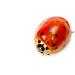 Ex-Ladybird