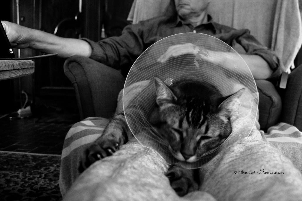 life is less difficult on dad's lap by parisouailleurs