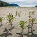 Wild Beach Grass