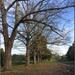 Karapiro Trees